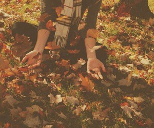 autumn, leaves, and cool image