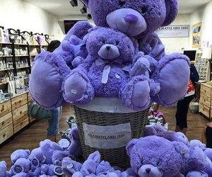 bear, purple, and teddy bear image