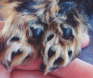 paws, puppy, and yorkshire terrier image