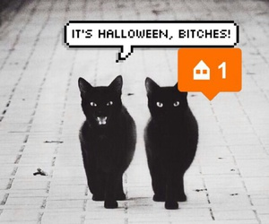 cats, Halloween, and background image