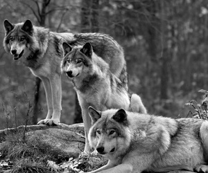 Image by wolves