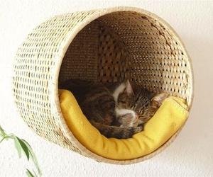 cat and diy image