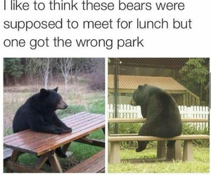 funny, bear, and park image