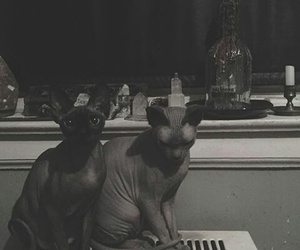 cat, sphynx, and loulouleroux instagram image