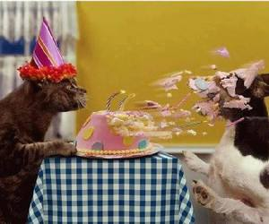 dog, cat, and birthday image