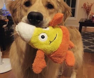 dog, pretty, and toy image