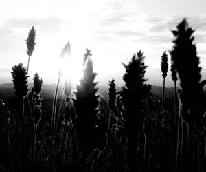 b&w, black and white, and lavanda image