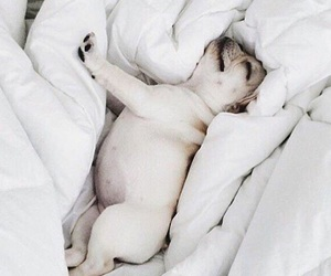 bed, puppy, and chill image