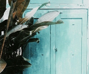 plants, turquoise, and blue image