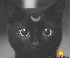 cat black, gato, and Halloween image