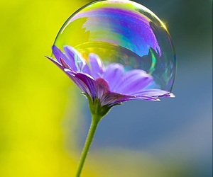 flowers and bubbles image