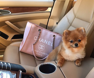 dog, chanel, and car image