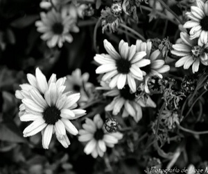 black and white and flores image