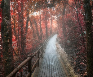 autumn and way image