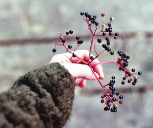 berries, girl, and hand image