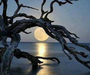 full moon, reflection, and drift wood image