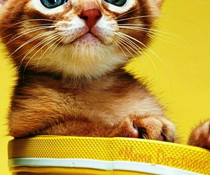 adorable, cute, and kitten image