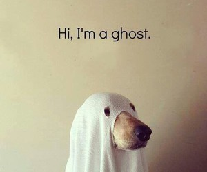 dog, ghost, and hapyy halloween image