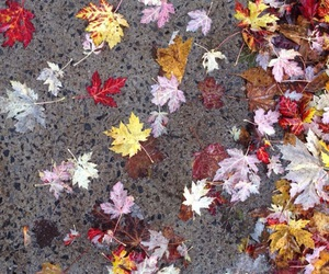 beautiful, fall, and leaves image