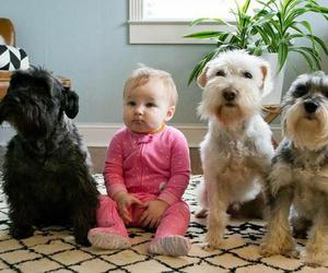 dogs, cute, and love image