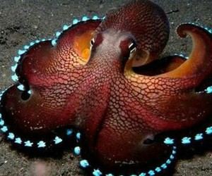 colorful, eyes, and tentacles image