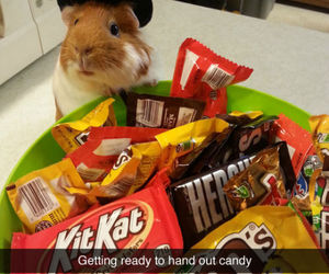 Halloween, cute, and candy image