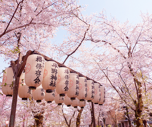 japan, cherry blossoms, and cherry blossom image