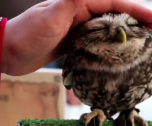 owl, cute, and animal image