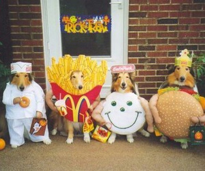 dog, Halloween, and funny image