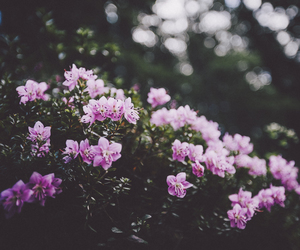 alternative, flowers, and photography image