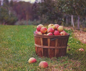 apples, beautiful, and outdoors image