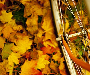 autumn, bike, and leaves image