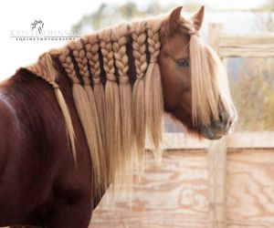 beautiful, brown, and pony image