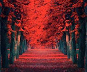 art, nature, and autumn image