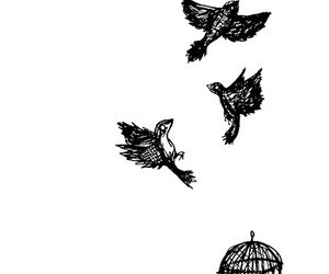 birds, cage, and freedom image