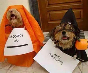 Halloween, dogs, and pets image