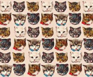 cat, kittens, and kitty image