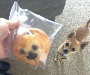 dog, funny, and muffin image