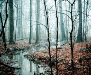 forest, photography, and tree image