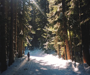 forest, snow, and nature image