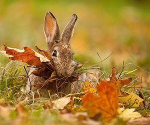 autumn, bunny, and rabbit image