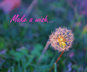 dandelion, nature photography, and inspirational quote image