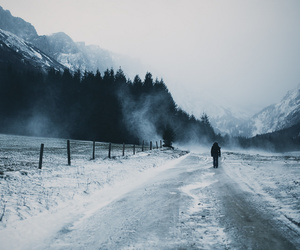 nature, winter, and photography image