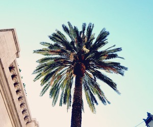 happiness, palmtree, and photography image