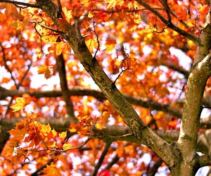 fall, leaves, and tree image