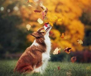 animal, autumn, and leaf image