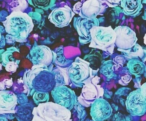 background, blue, and roses image