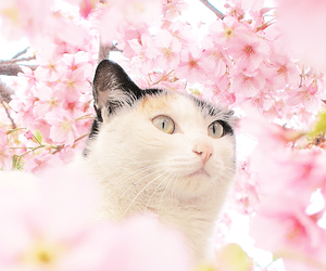 animal, cat, and pink image