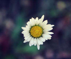 automn, color, and flower image