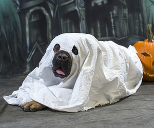 costume, ghost, and dog image